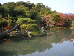 天竜寺の庭園