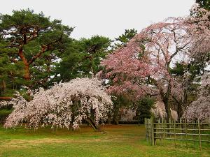 京都御苑・近衛邸跡