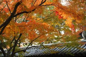 京都 紅葉 東福寺 2013秋