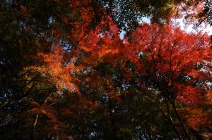 京都 紅葉 泉涌寺 2013秋