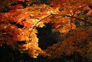 京都 紅葉 毘沙門堂 2013秋