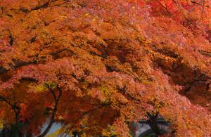京都 紅葉 南禅寺 2013秋