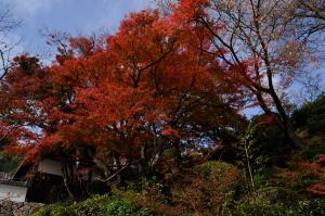 京都・善峰寺