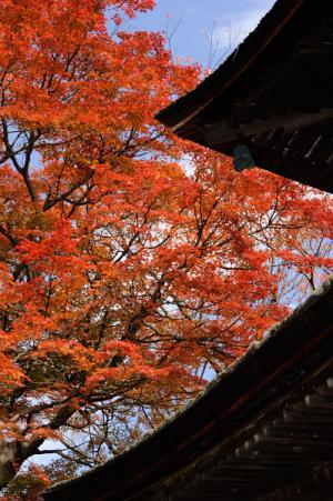 京都 紅葉 善峰寺 2014秋