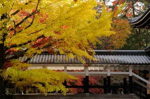 京都 紅葉 天授庵 2014秋