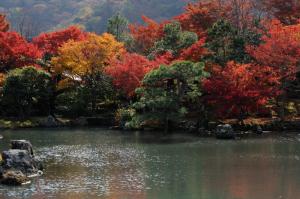 京都 紅葉 嵐山 天龍寺 2014秋
