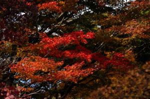 京都 紅葉 嵐山 清涼寺 2014秋