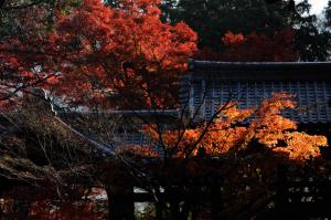 京都 紅葉 真如堂 2014秋