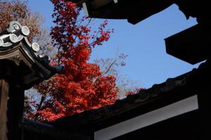 京都 紅葉 曼殊院 2014秋